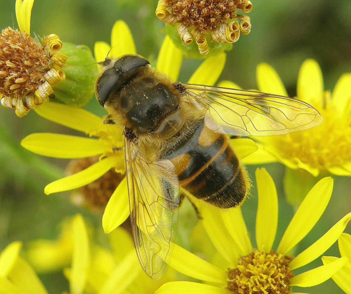 benefit of flies