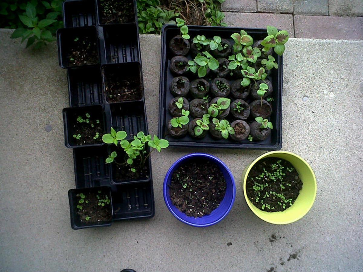 beginning gardening for dummies