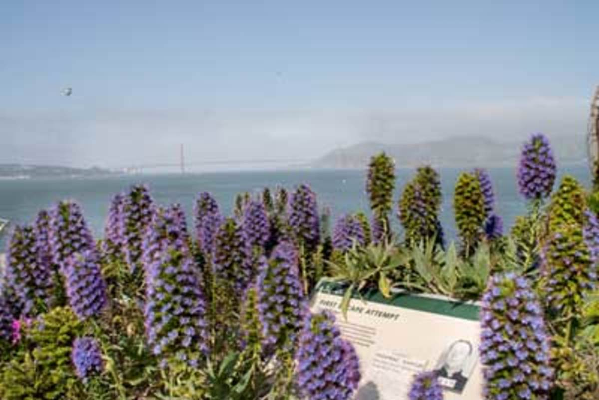 Tough Plants Recommendations From Alcatraz Gardens Horticulture