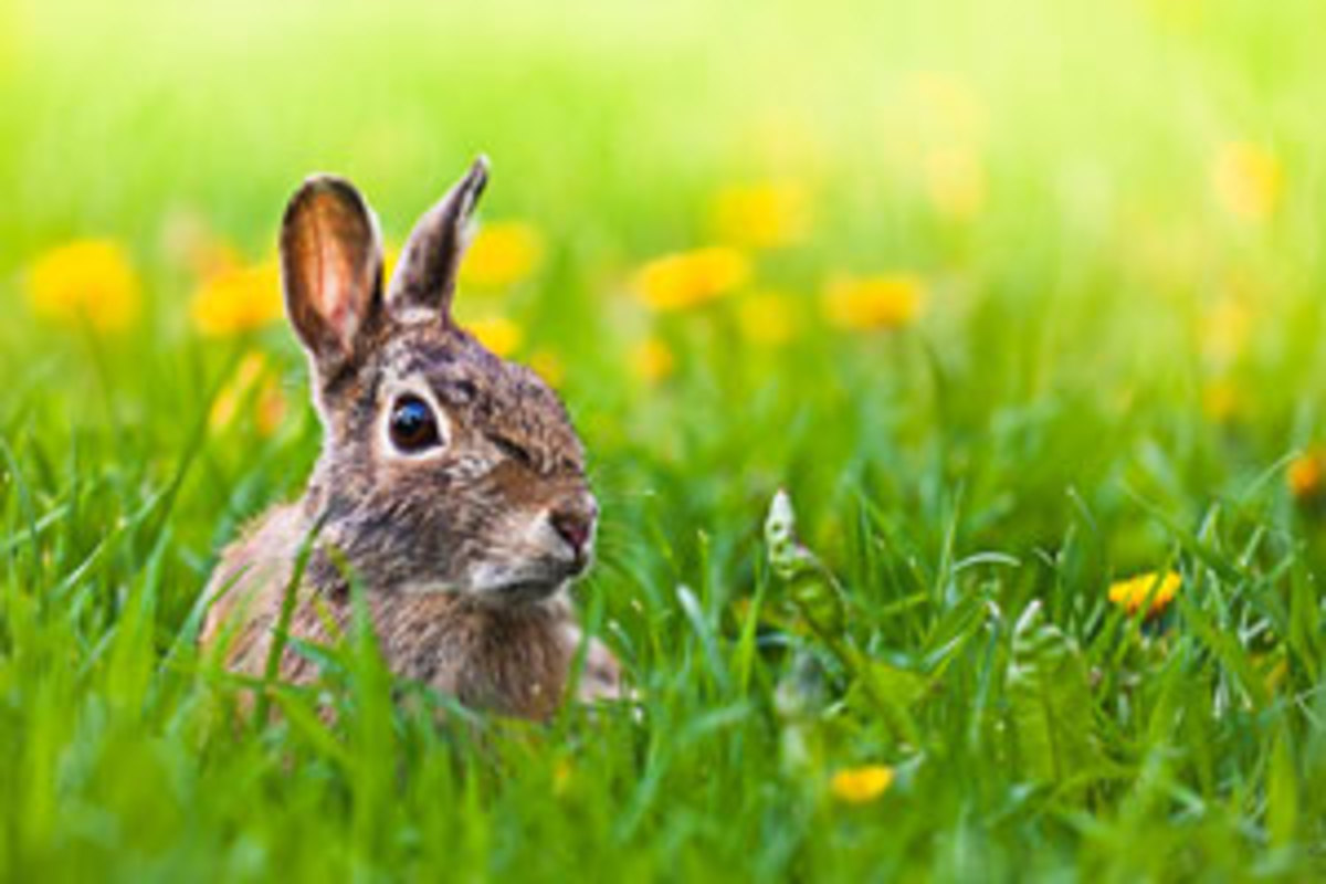 Ways to Keep Rabbits From Eating Garden Plants