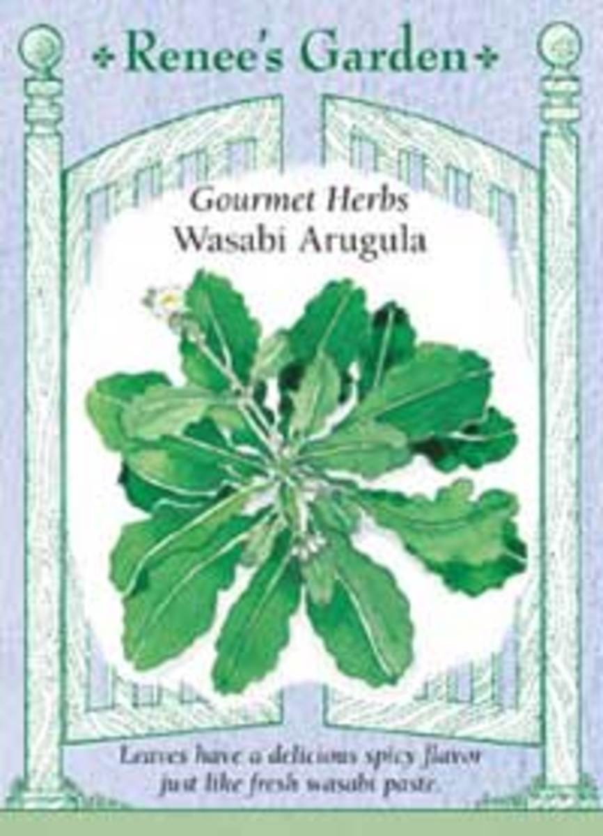wasabi arugula