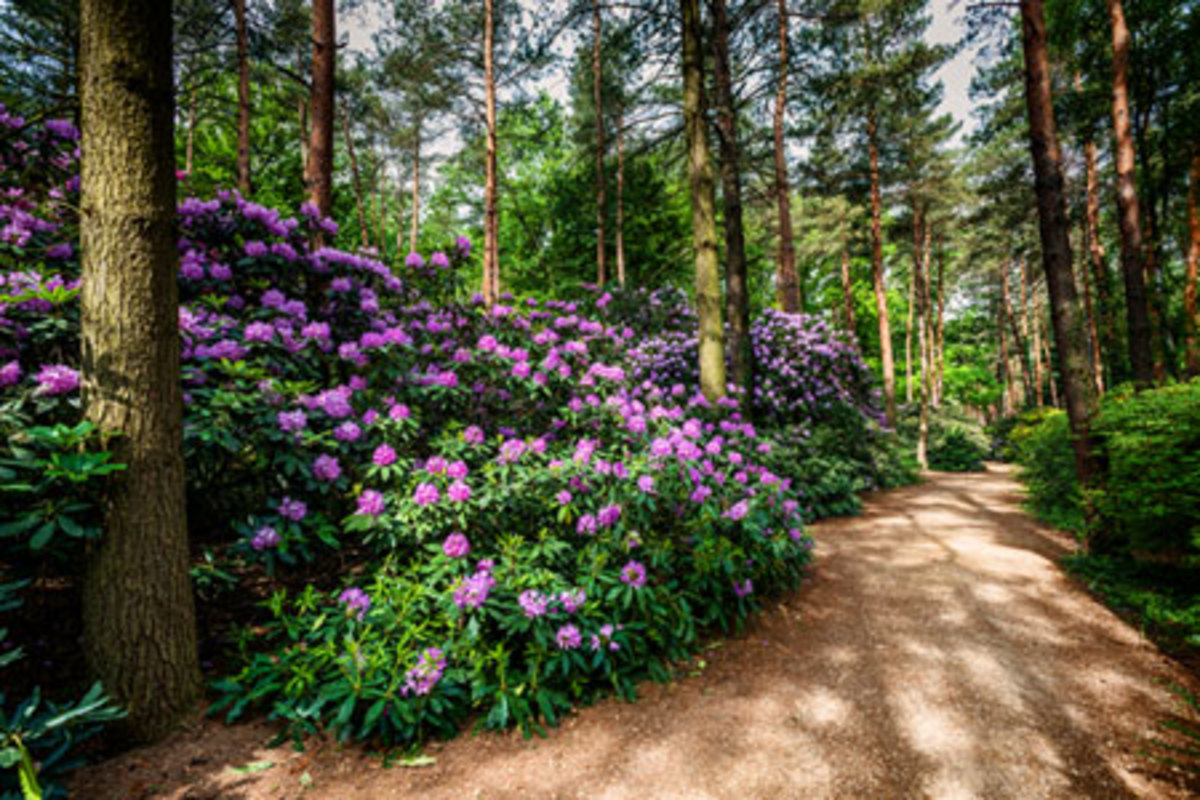 Rhododendrons are one example of a plant that requires a certain soil pH. They prefer acidic soil.
