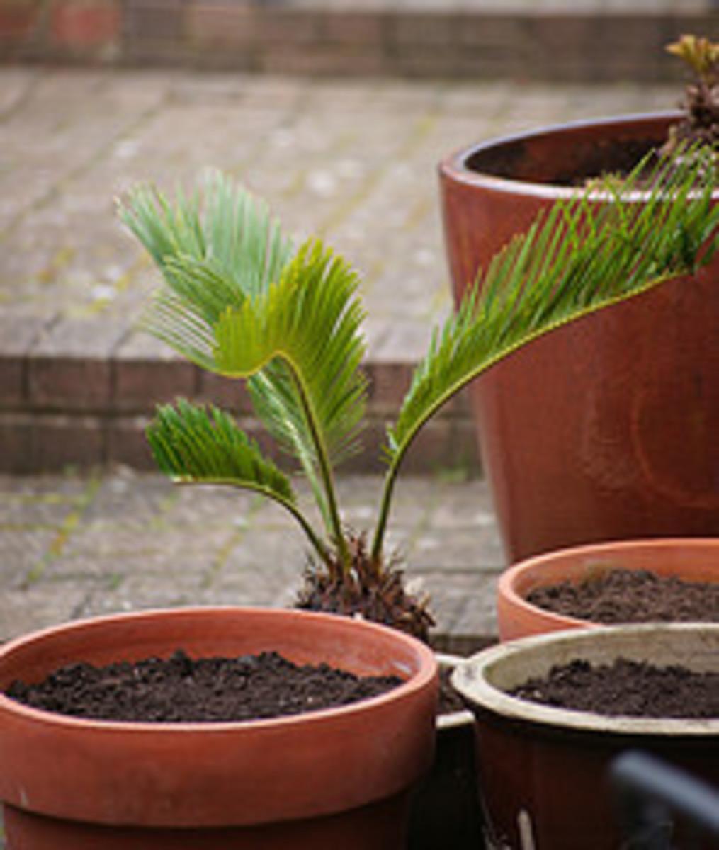pots with potting soil