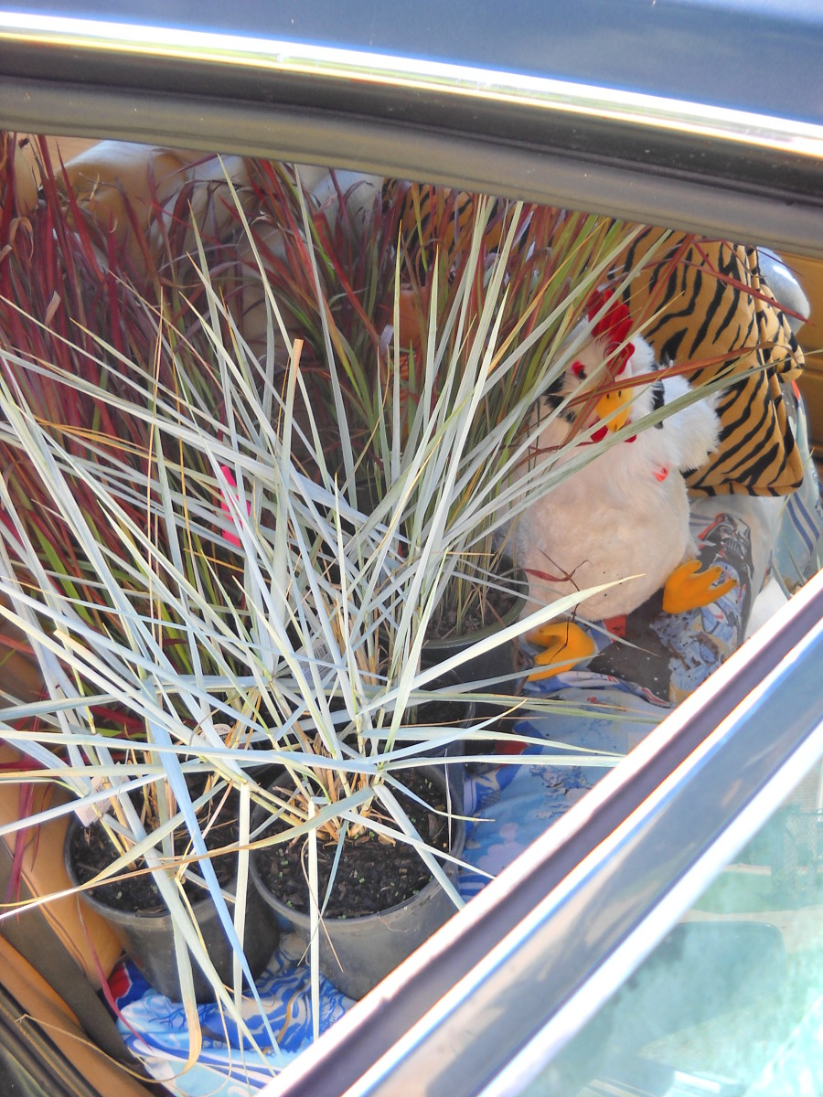 Grasses, with Chicken