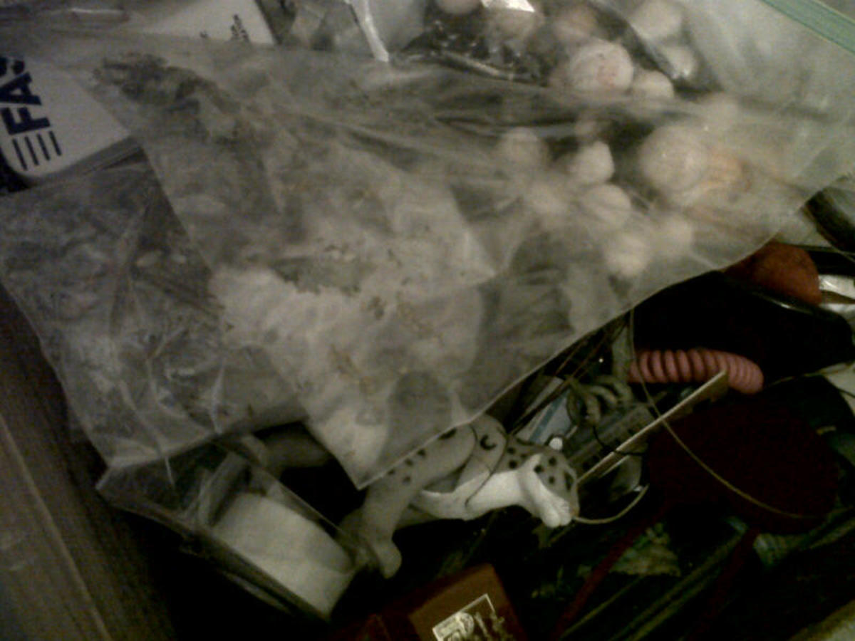 Bags and tins of unidentified seeds in our junk drawer...