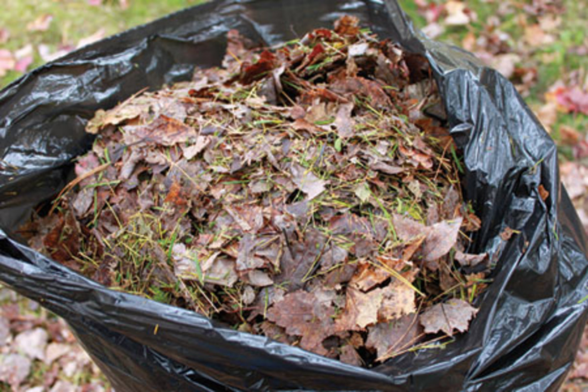 Fallen leaves and the last grass clippings of the season make a great start for a compost pile. Image copyright Niki Jabbour.