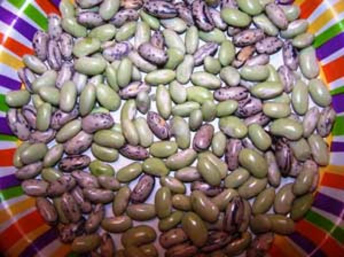 Growing Dry Beans For Soups And More Horticulture