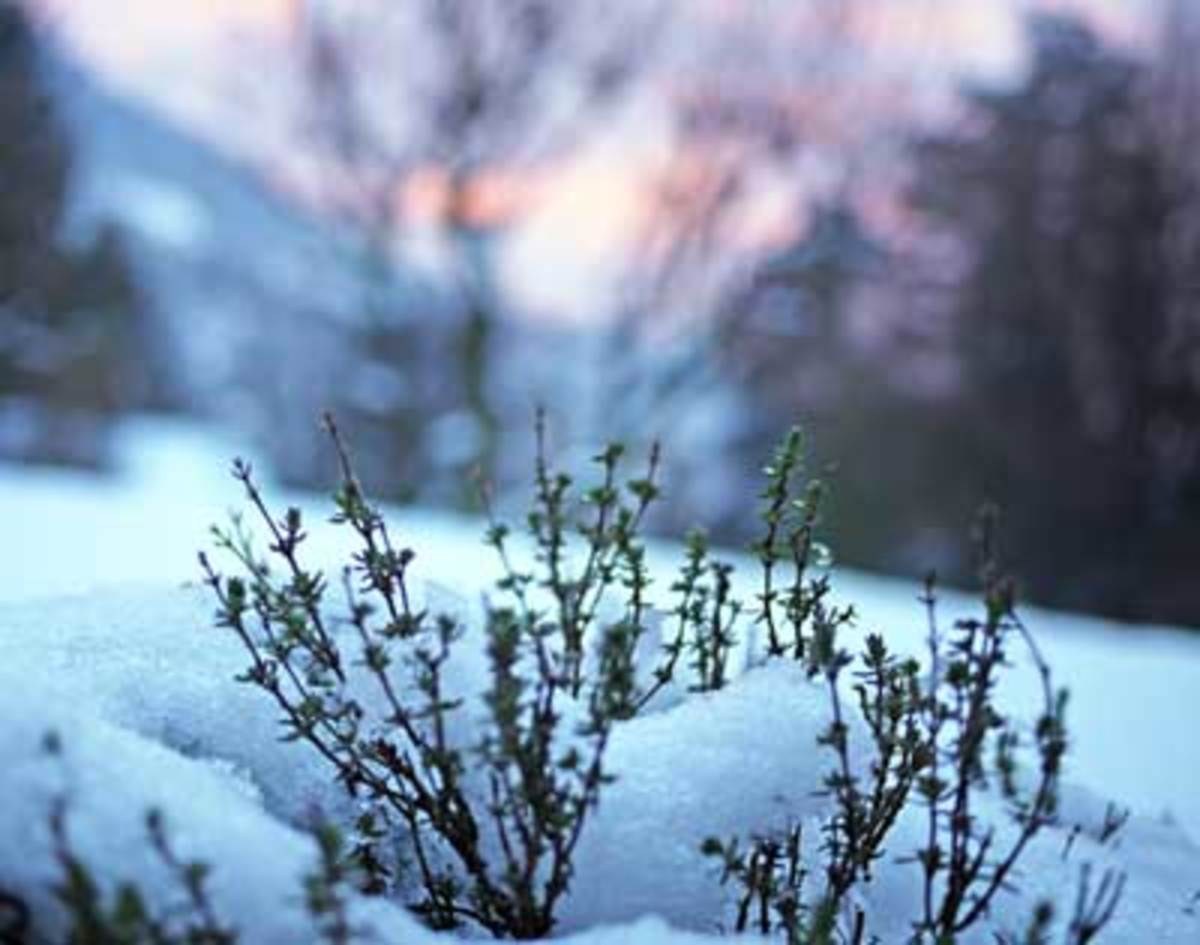 Winter Gardening Tips From Usda Zone 3 Horticulture