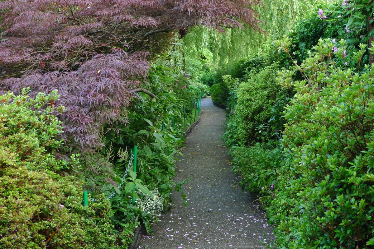 Monet's garden path