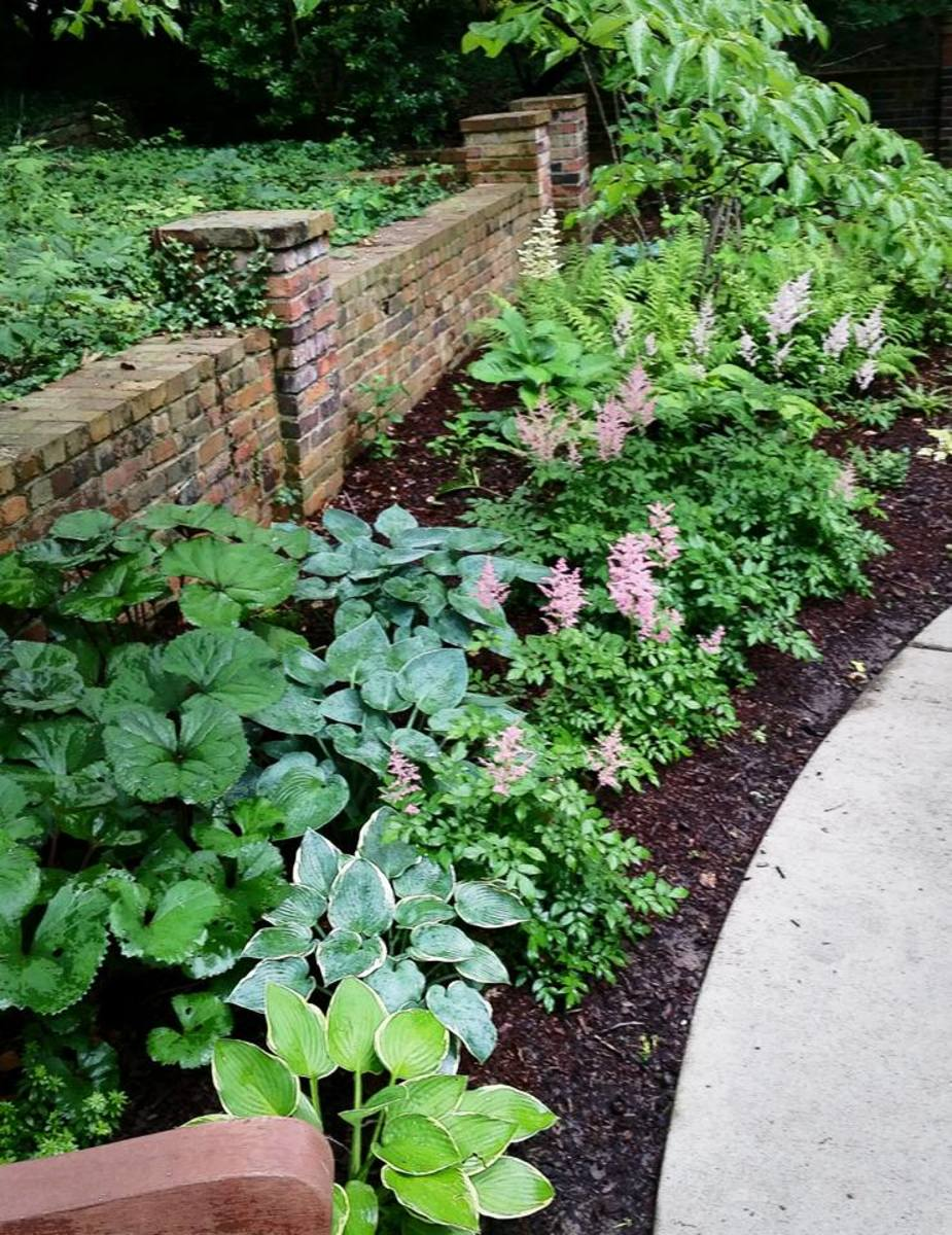 shade garden Bettman Nature Preserve