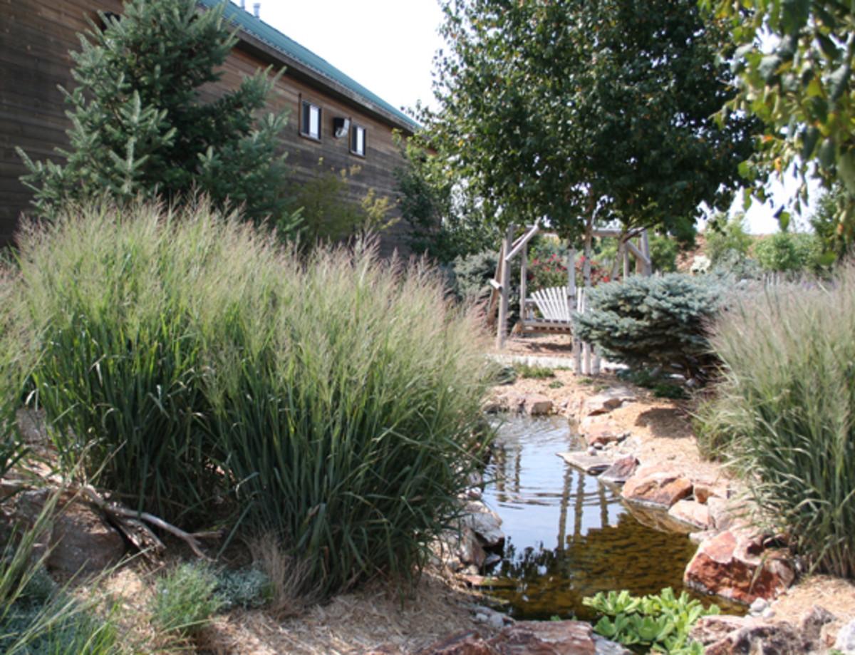 Dallas Blue Switchgrass