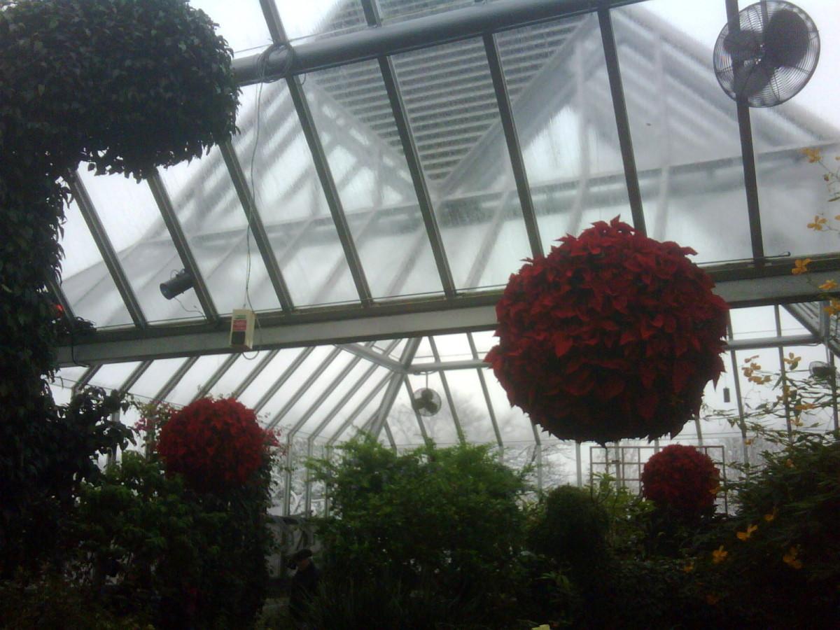 Poinsettia Death Star