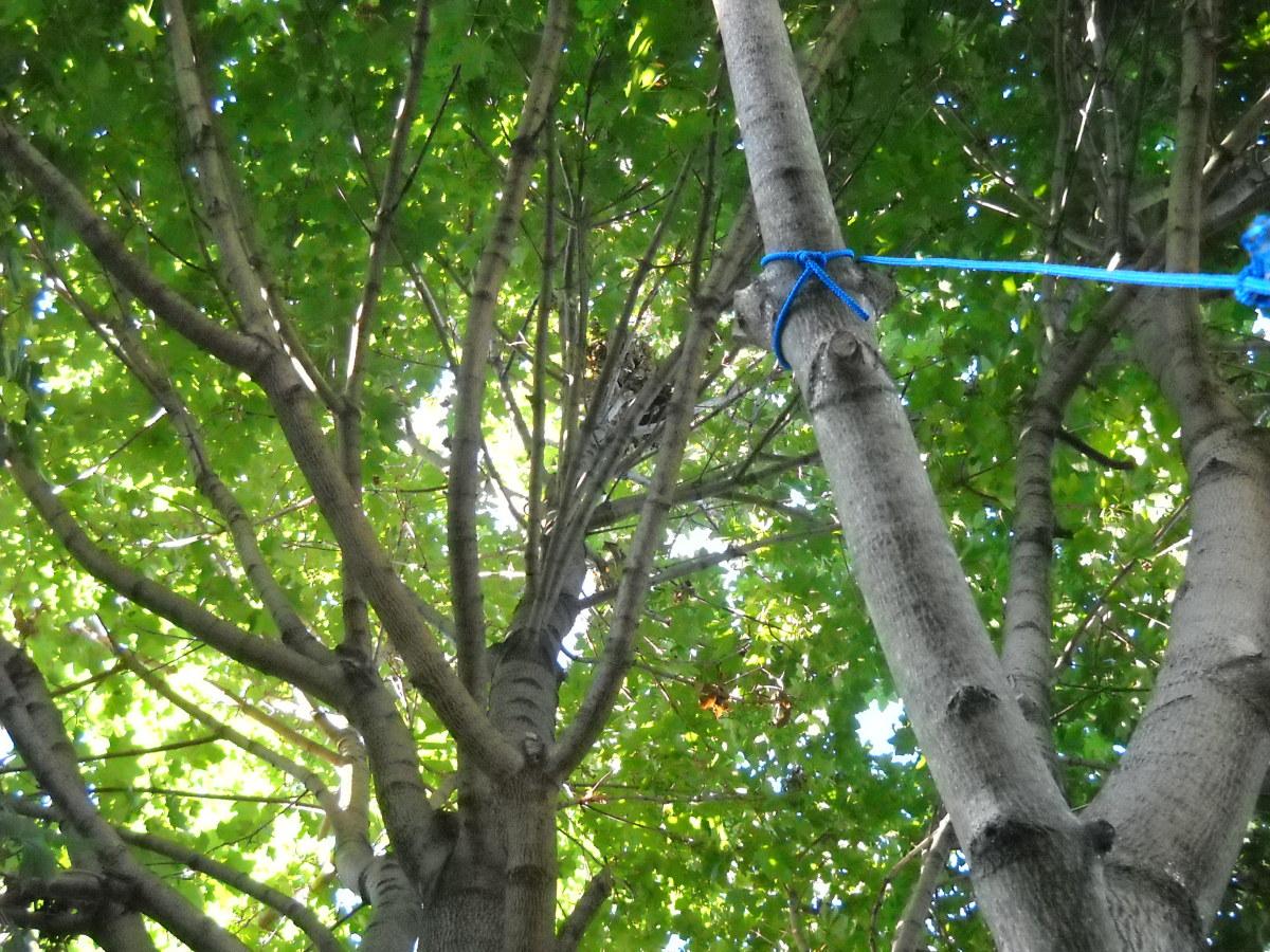Squirrels' nest!