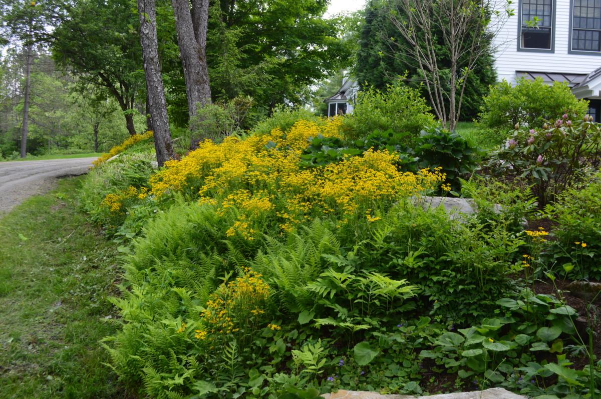 low-maintenance garden