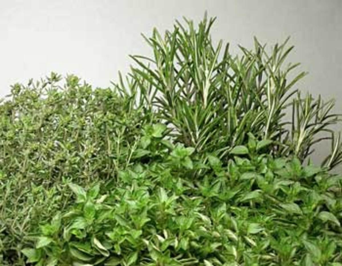 thyme oregano rosemary