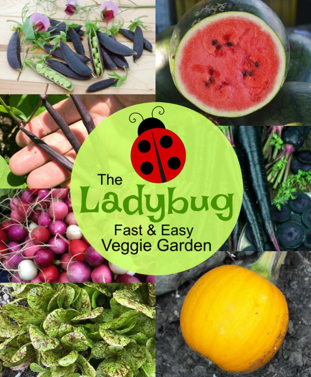 ladybug-w