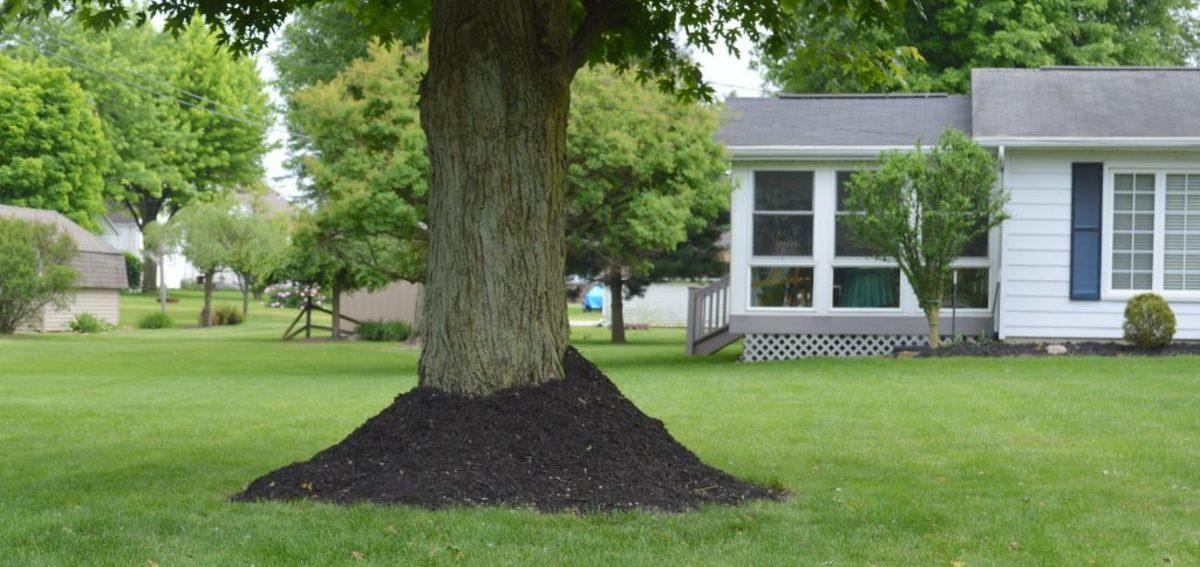 Mulch Alternatives Around Trees Horticulturehorticulture