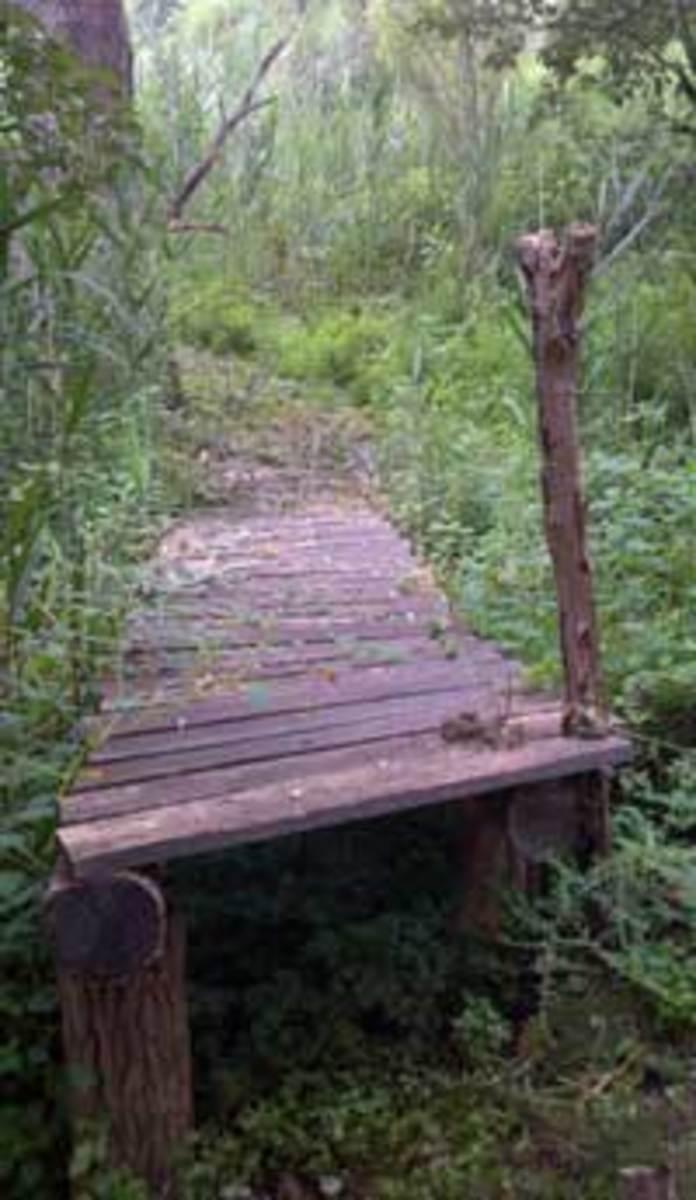 Bridge-to-Brother's-Island_Brine_Garden_090312