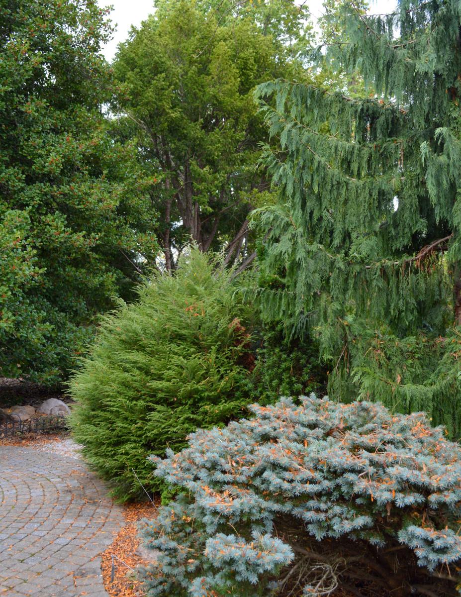 Garden Trekking Rowe Arboretum Conifers