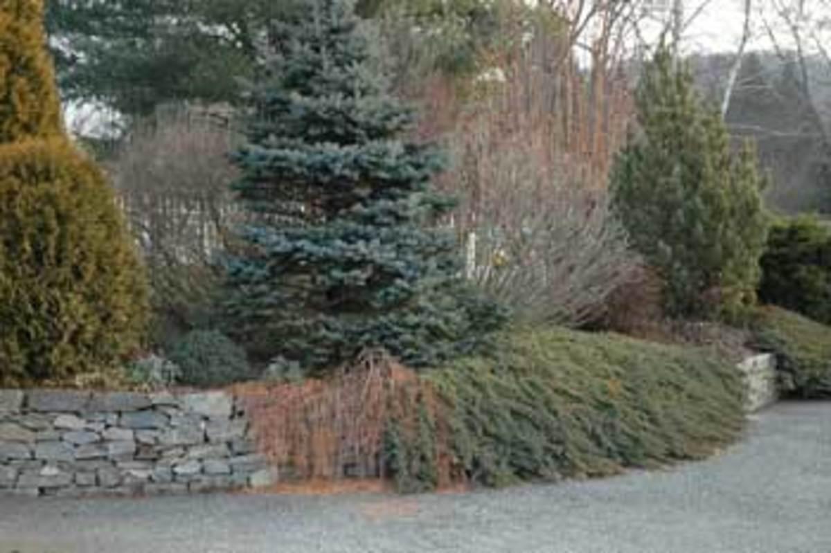 Driveway-Garden-Winter