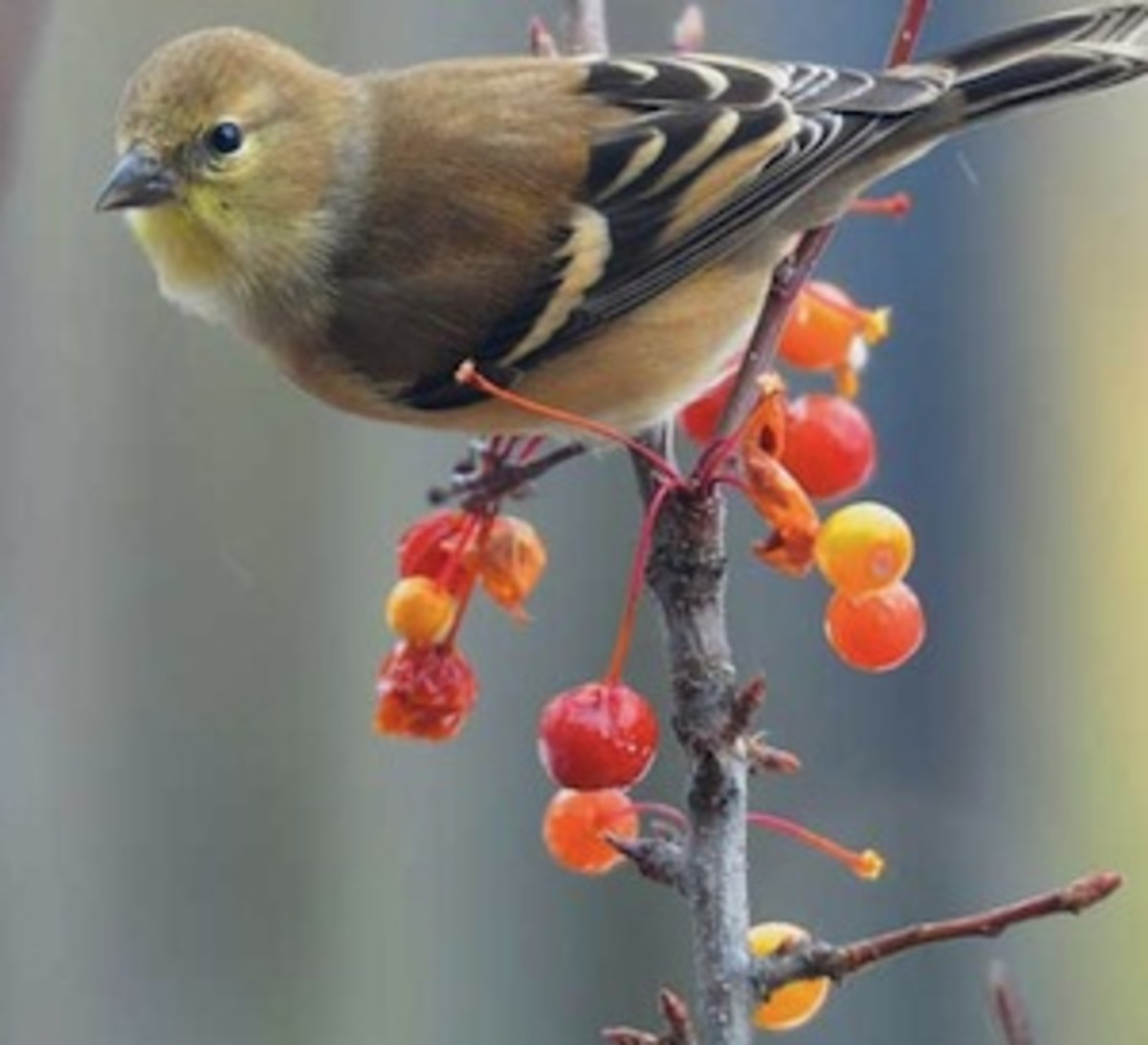 Hort Naomi Sachs bird