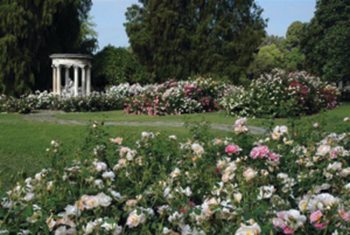 Rose Garden Huntington Gardens