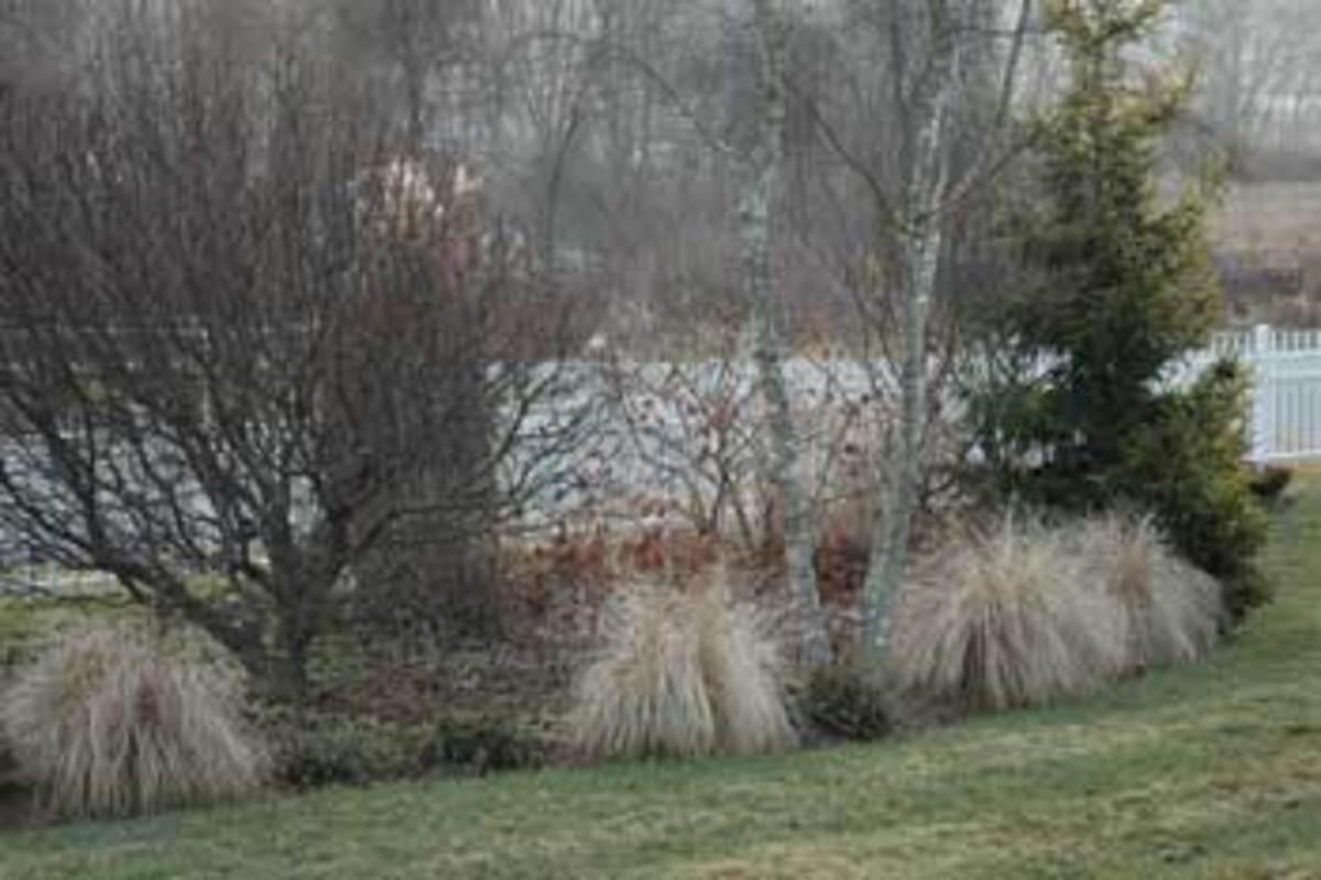 Deciduous-&-Evergreen-Garden-#1