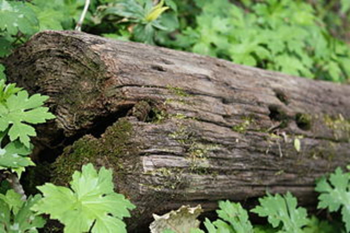 fallen log in garden