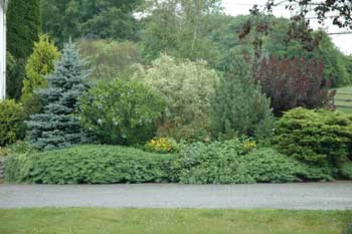 Driveway-Garden-Summer