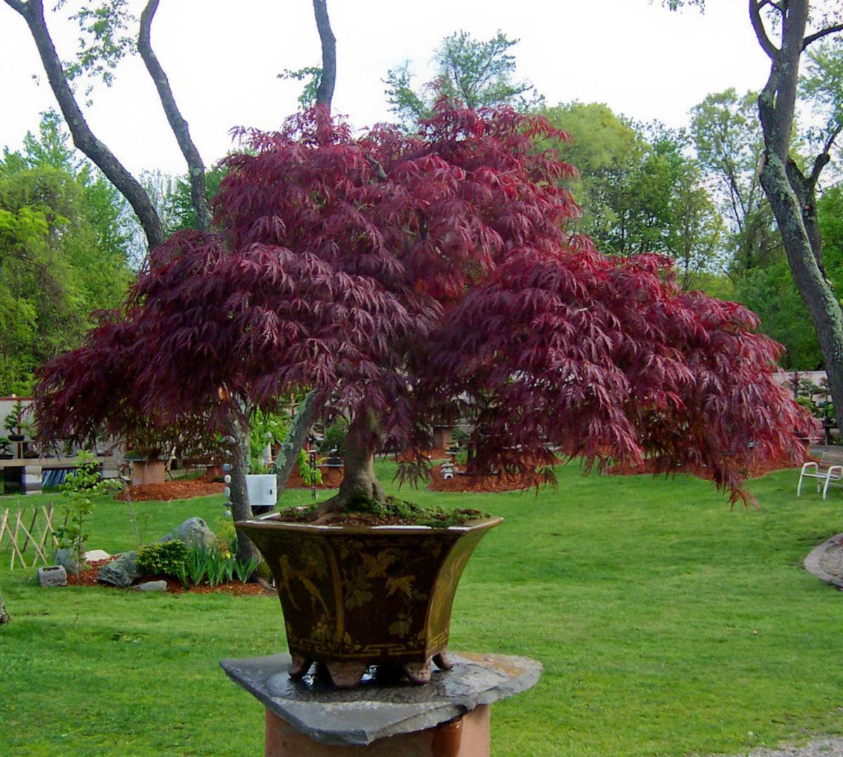 growing trees in pots