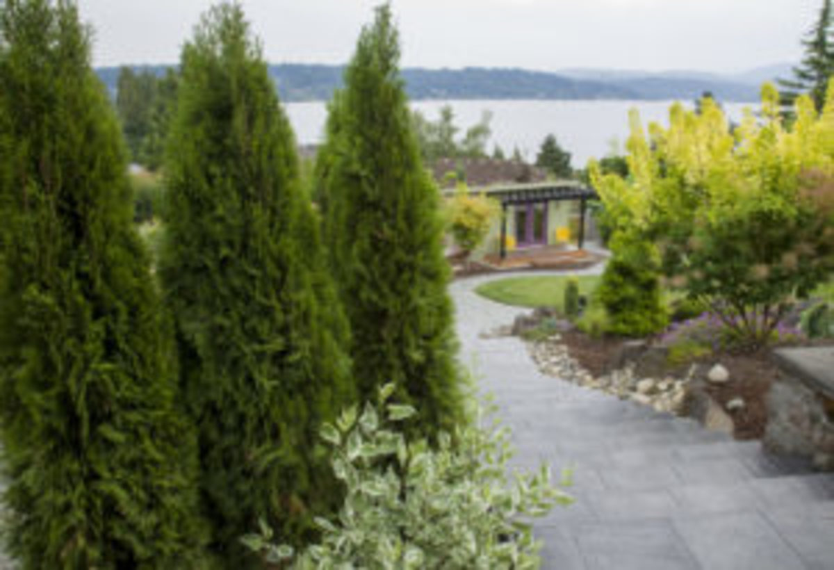 best plants to hide a view, thuja