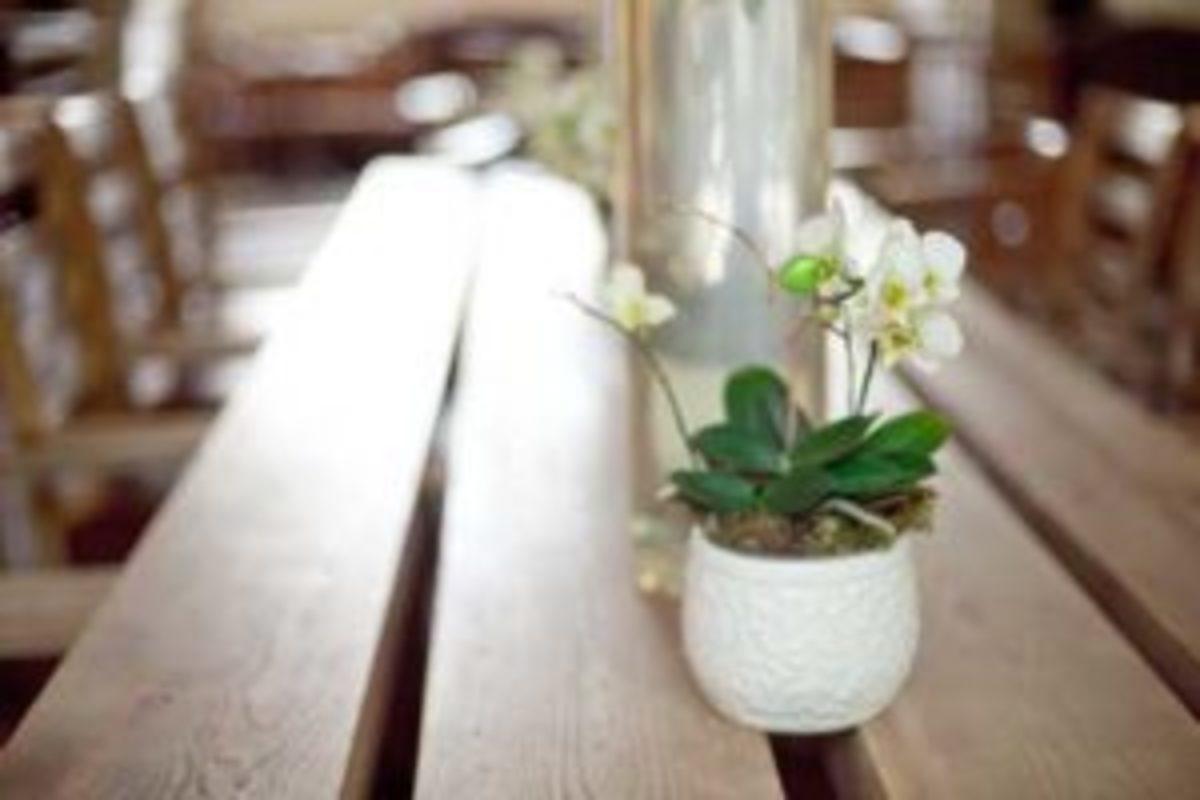 miniature moth orchids