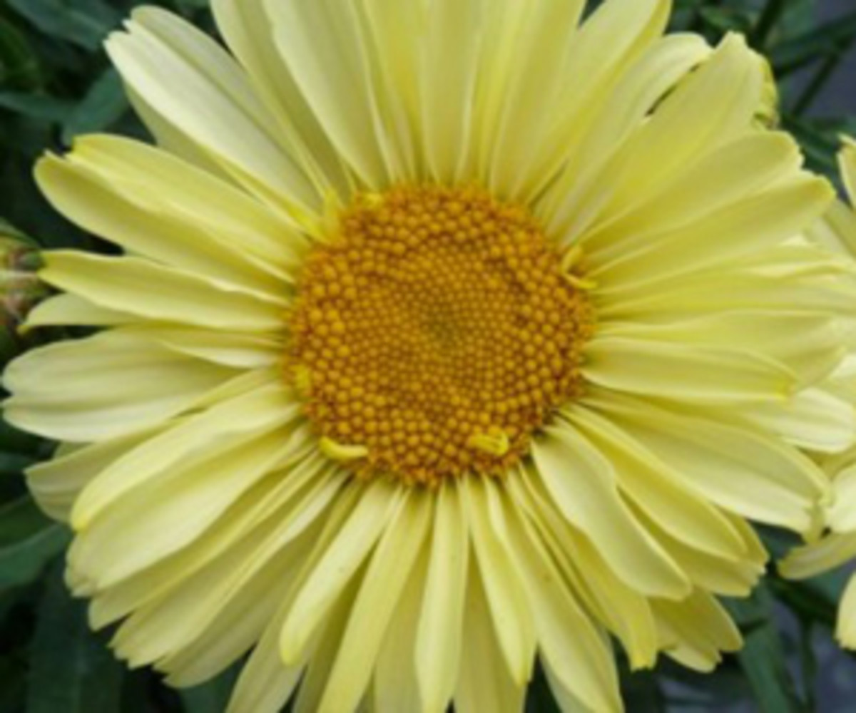 Real Sunbeam Horticulture