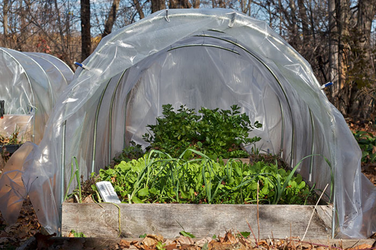 A mini hoop tunnel shelters spinach, lettuce, leeks and other cold-tolerant vegetables for harvest from fall through winter.