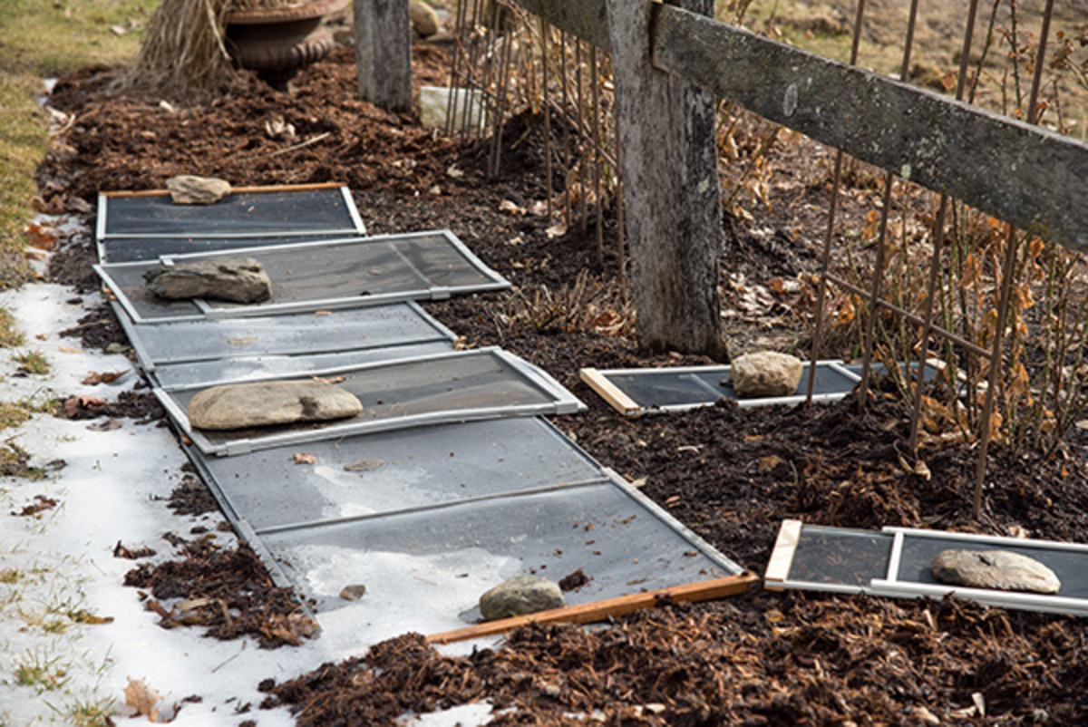 Stones hold the screens in place until the ground freezes solid, at which point the screens can be stored away.