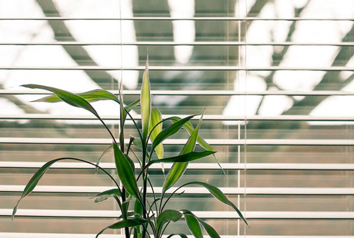 houseplantwindow