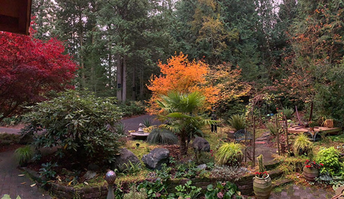 Fall brings unique beauty to the garden, as well as time to reflect.