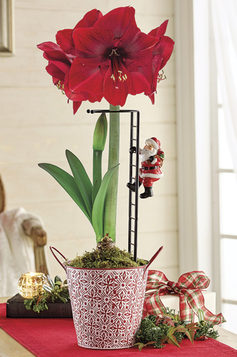 Holiday_Garden_Gift_Guide_Brecks