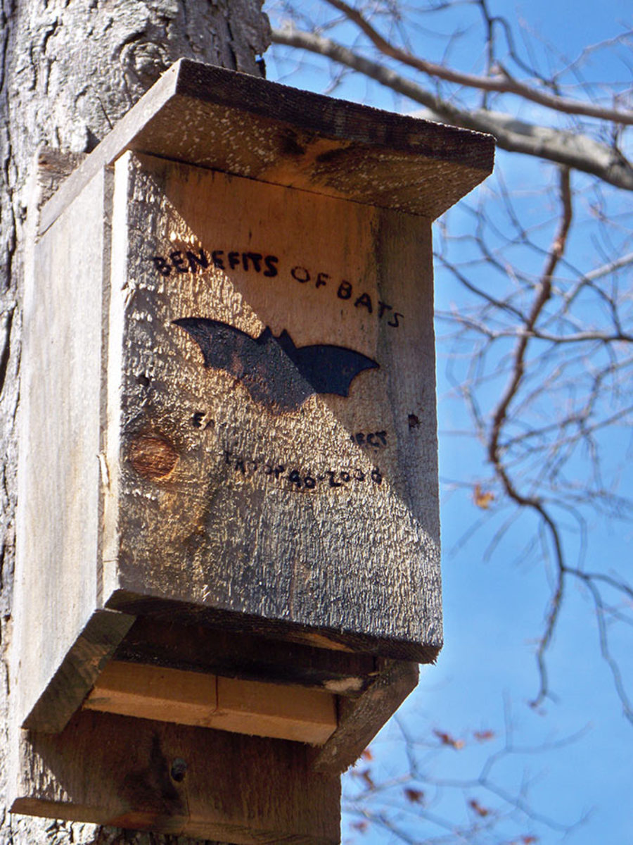 A bat house has a narrow interior and a down-facing enter/exit point. This one is mounted on a tree, but a building or free-standing pole would be a better choice.