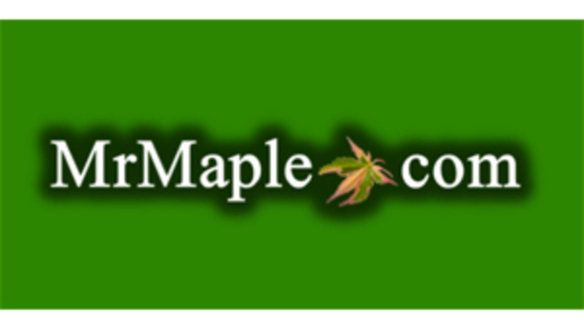 mrmaple