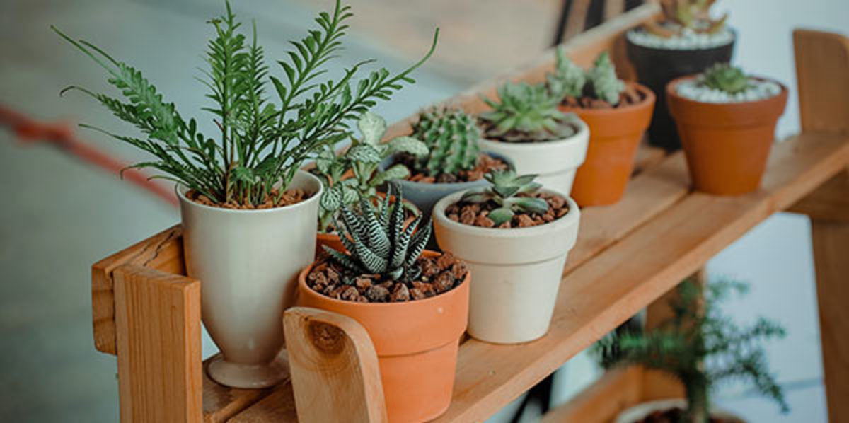 Choosing the Right Houseplants for Your Place - Horticulture