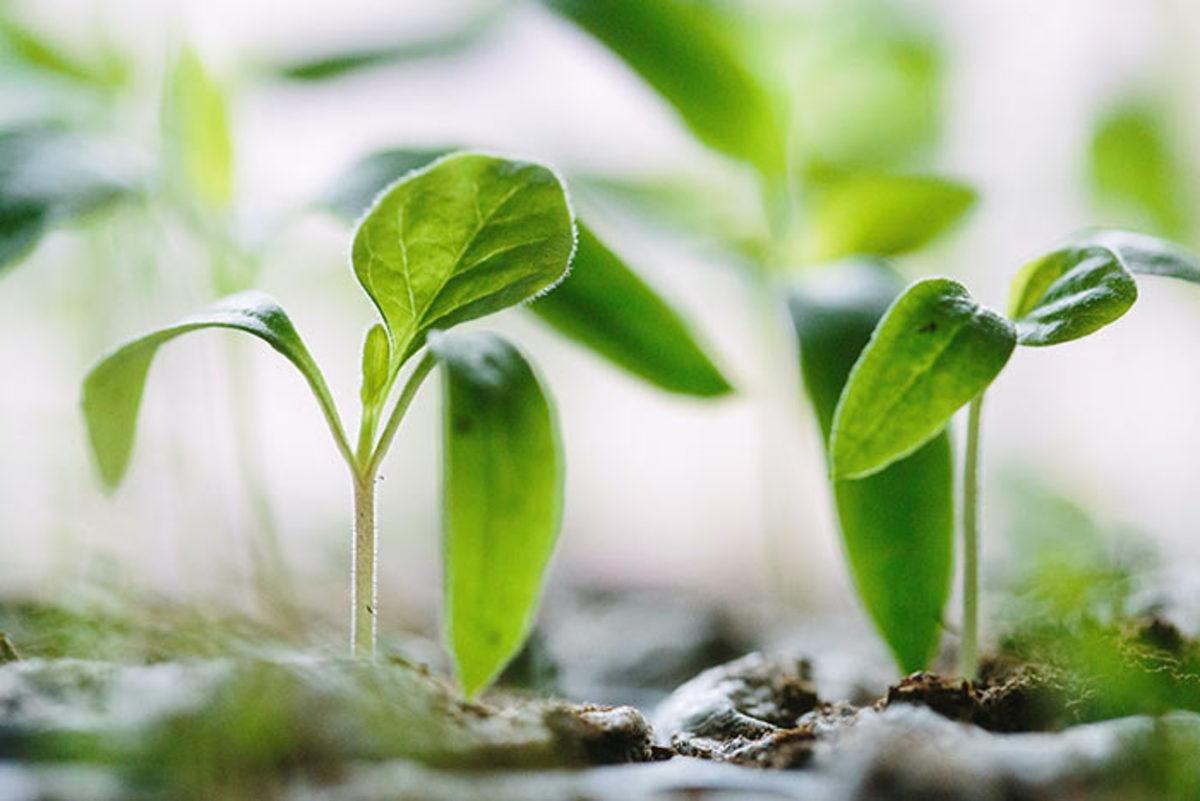 seedlings217