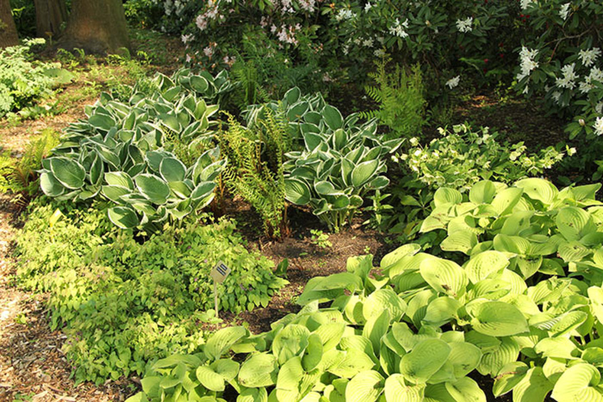 The hostas, epimediums and ferns in this garden could be divided and/or moved in spring to eliminate gaps and expand the planted area.