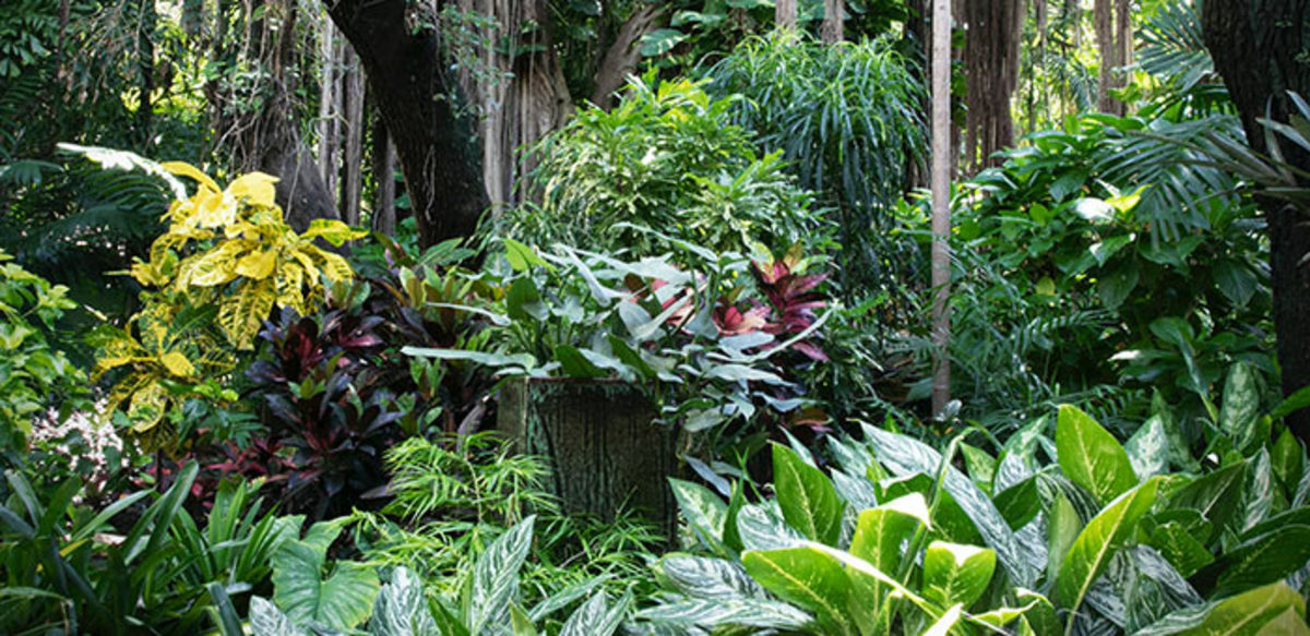 Layers of large leaves in bold colors and patterns are a hallmark of a tropical garden.