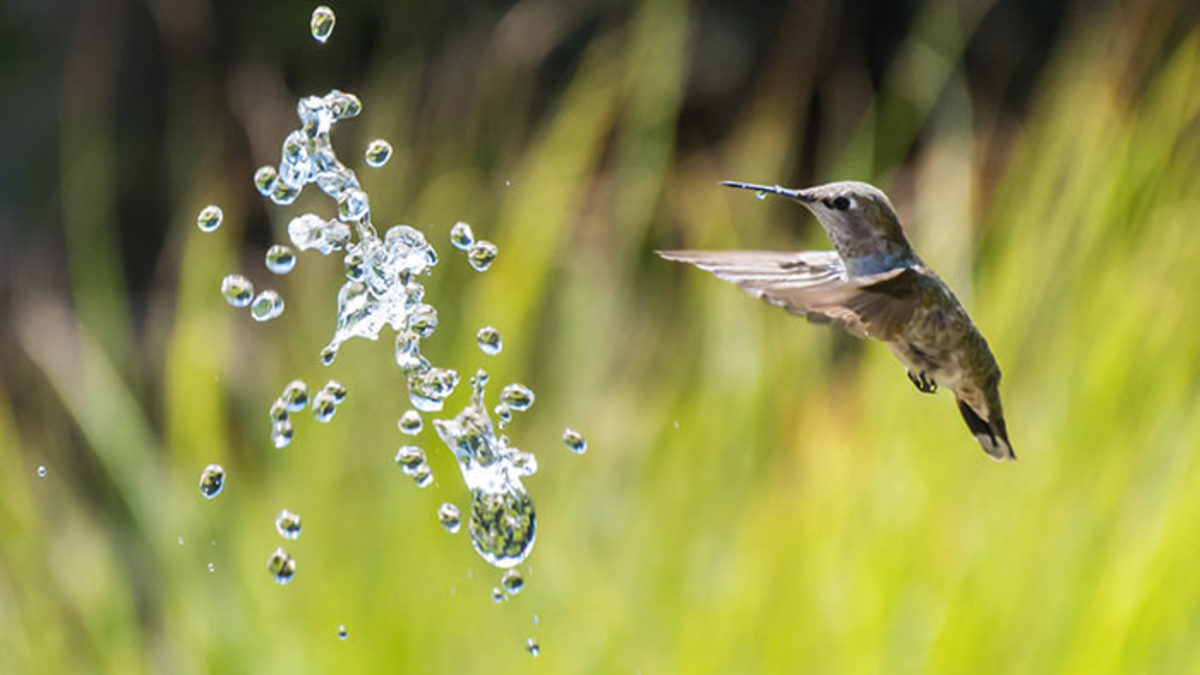 Bonus tip: Add a water feature that sprays and watch the hummers dart in and out of the spray.