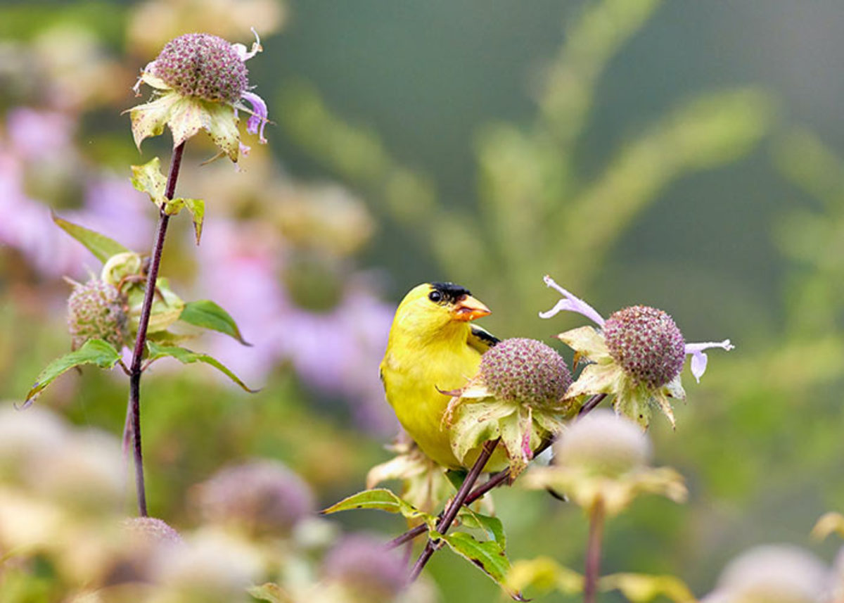 """Abandoning concepts like """"cleaning up"""" plants and gardens can welcome in the beauty of wildlife."""