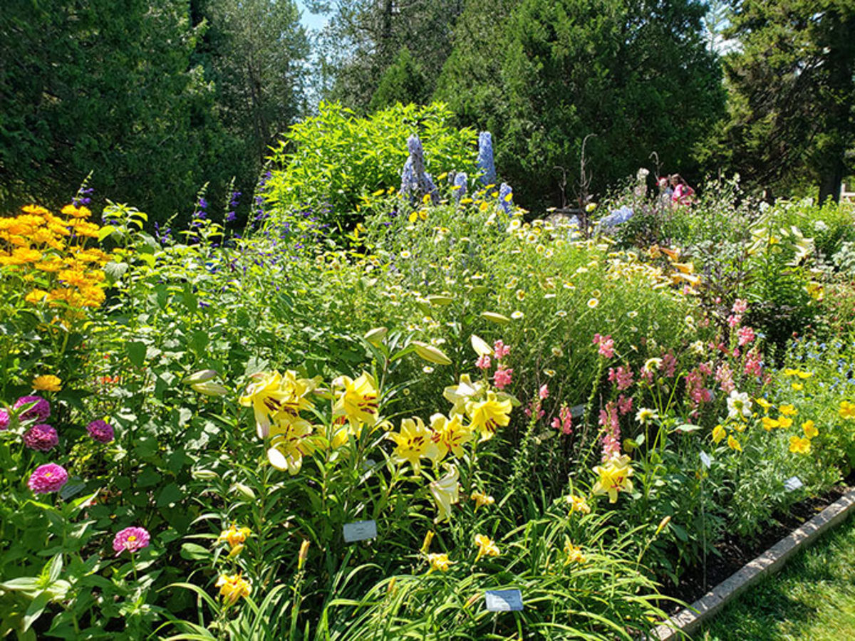 Thuya Garden's perennials and annuals are arranged in long, straight borders.