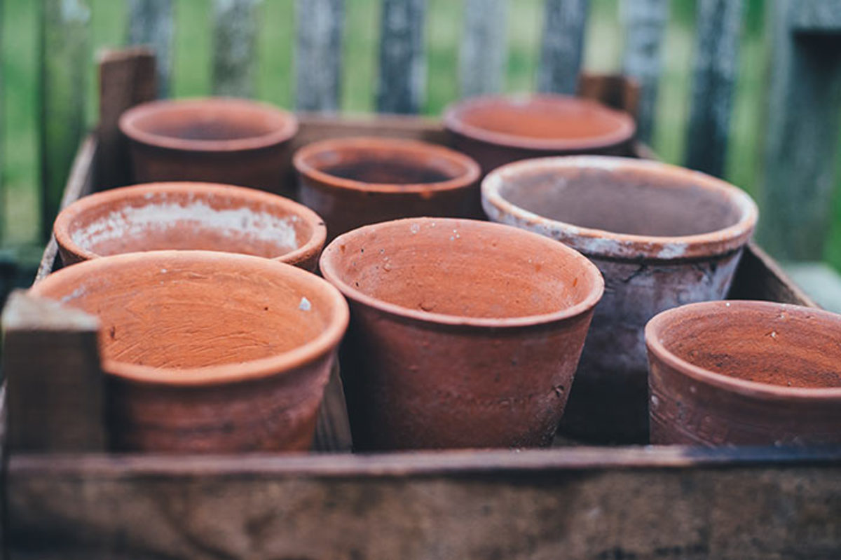 In lieu of plastic seed trays, try starting seeds in small terra-cotta pots gathered in a wooden box, such as the type that carries clementines.