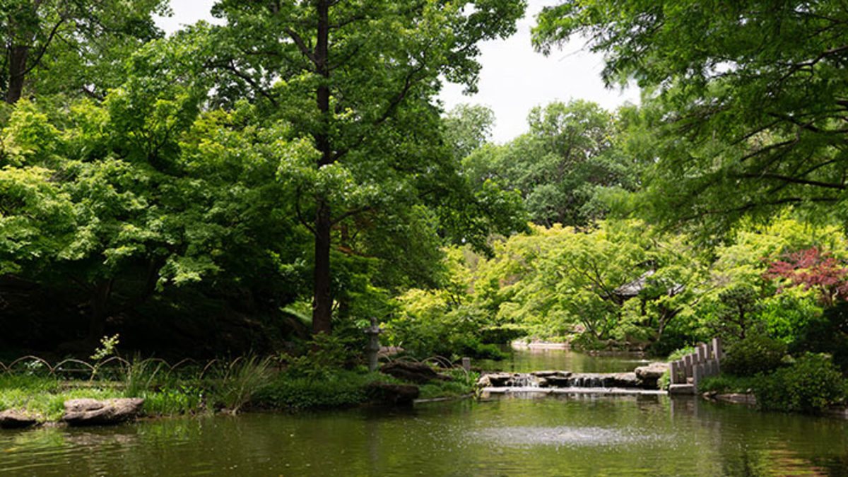 A scene from the Fort Worth Botanic Garden in Fort Worth, Texas.