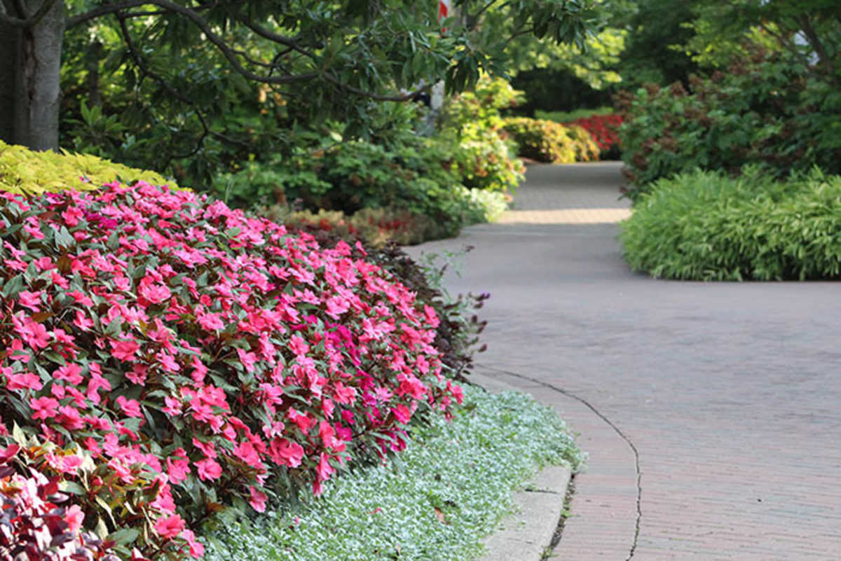 Paths connecting the Zoo's animal exhibits offer visitors plenty to admire. The beds also serve as trial gardens for annuals and perennials facing the region's heat and humidity.